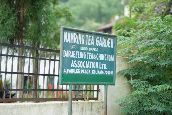 ナムリングアッパー茶園